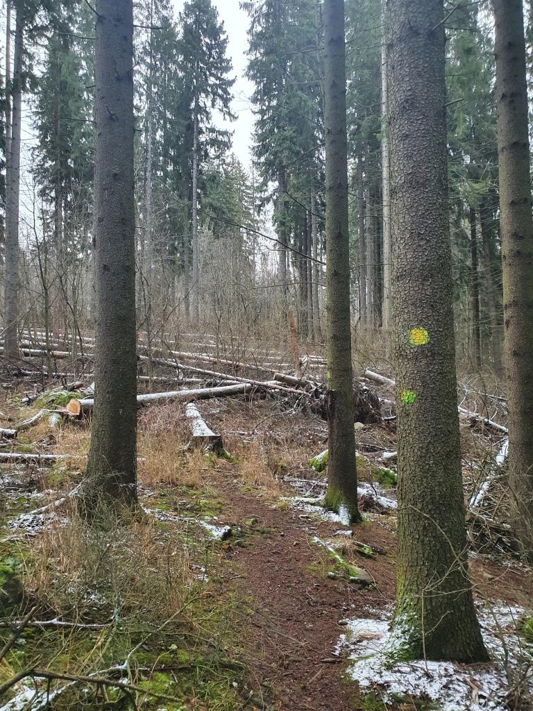 Lahden Tanssimäenpuiston myrskyssä kaatunutta puustoa ja puissa näkyvät opasmerkinnät.